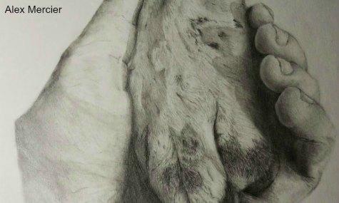 A Paw inthe Hand - Mercier, Alex - grade 8 - HM