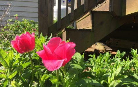 Amor Terrae: The Budding of Spring
