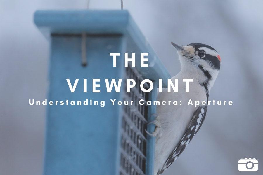 Understanding+Your+Camera%3A+Aperture