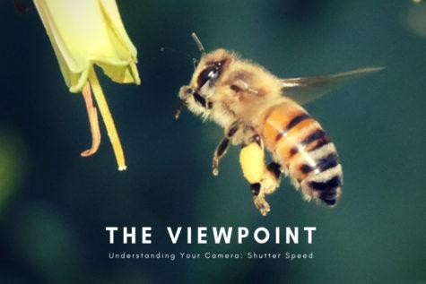 Understanding Your Camera: Shutter Speed