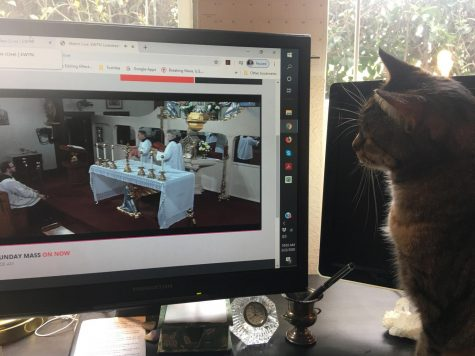 A new viewer for EWTN! Our cat is seeing Mass for the first time.