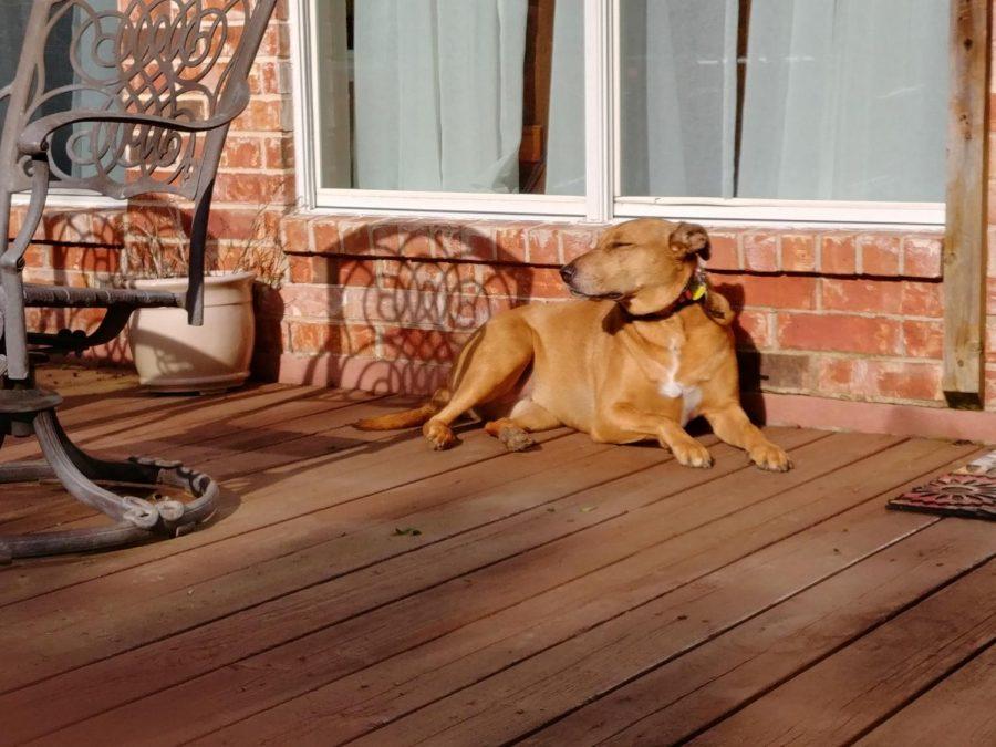 Dan's dog Betsy enjoying some morning sun.