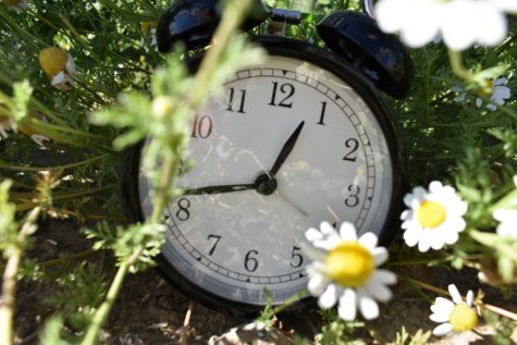 This is my backyard.  Does the clock  remind you of Alice in Wonderland?