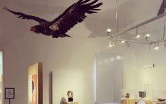 The California condor exhibit at the Ojai Valley Museum. The California condor is a highly endangered species.