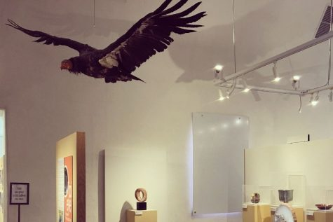 The California condor exhibit at the Ojai Valley Museum. The California condor is a highly endangered species.